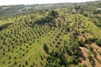 Продам земельный участок в Сочи