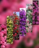 Растения цветы саженцы