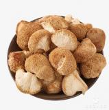 Продажа лечебных грибов: шиитаке, чага,
