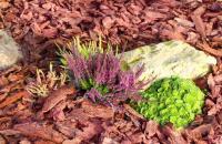 Кора сосны и кора лиственницы