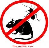 Избавление от насекомых, грызунов Сочи