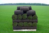 Рулонный газон, продажа и укладка