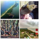 Экскурсия 3 города за 1 день. Балтийск,