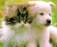 Купить : Ветеринария.Биокорректоры для з